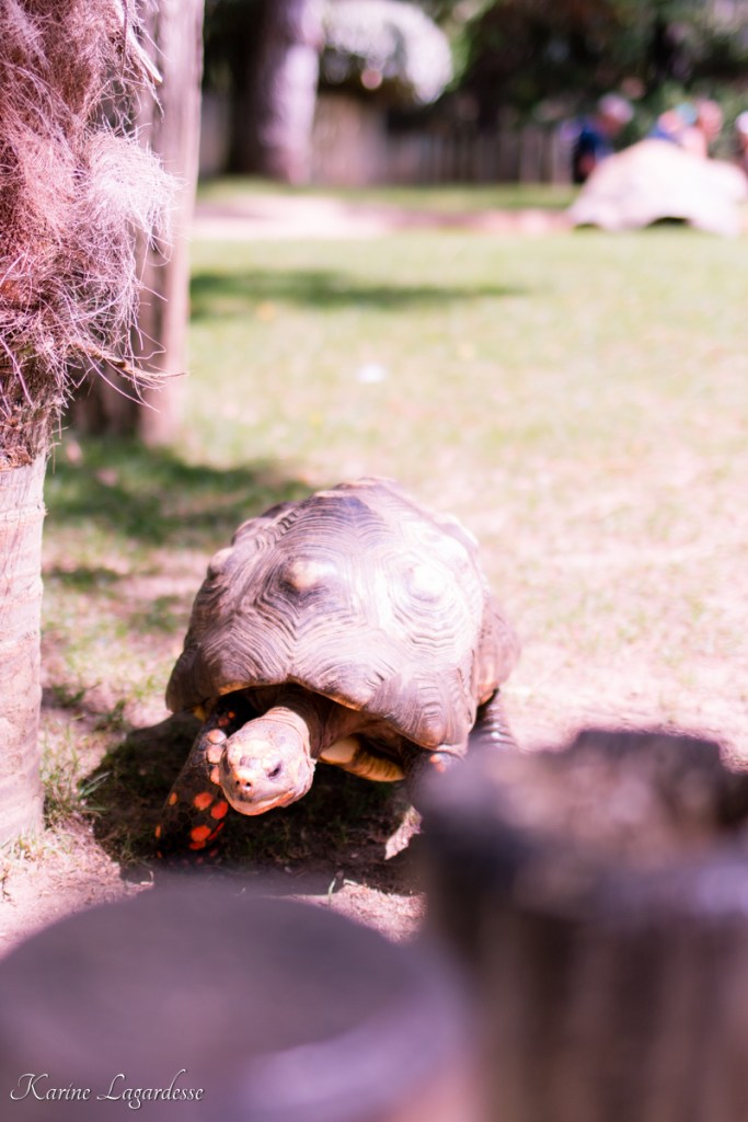 zoo-palmyre-made-me-happy-blog-bordeaux-58
