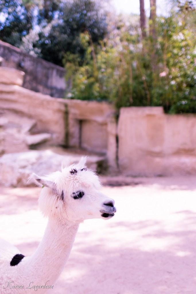zoo-palmyre-made-me-happy-blog-bordeaux-60