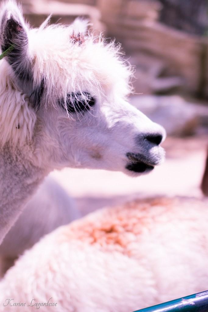 zoo-palmyre-made-me-happy-blog-bordeaux-63