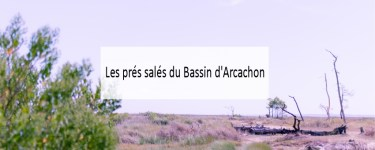 Les prés salés du Bassin d'Arcachon - Made me Happy - Blog Bordeaux Lifestyle (cover)