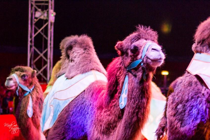 Grand Cirque de Noël - Blog lifestyle Bordeaux-13