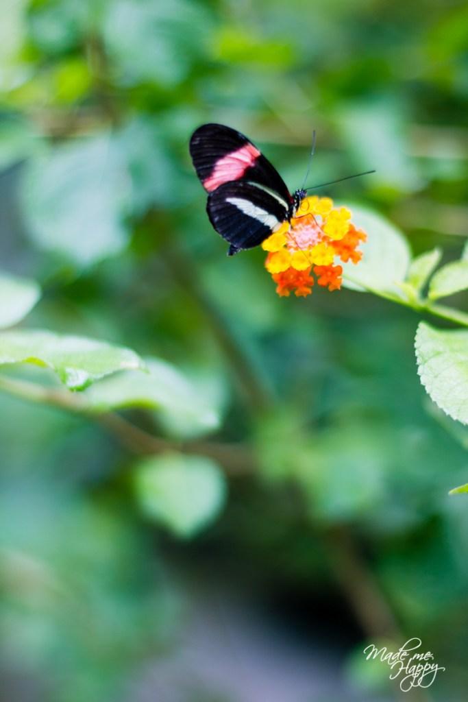 Le paradis des Papillons Sanguinet - Blog lifestyle Bordeaux