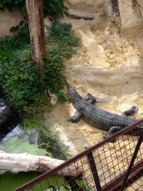 ferme aux crocodiles 15