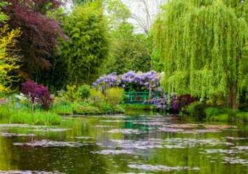 Il laghetto del giardino