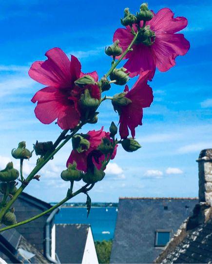 Isole bretoni: ÎLE AUX MOINES