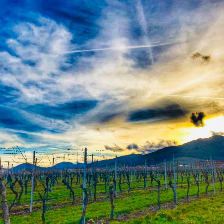 Strada dei Vini d'Alsazia:DAMBACH-LA-VILLE
