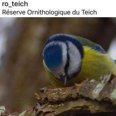 Riserva Ornitologica de Le Teich