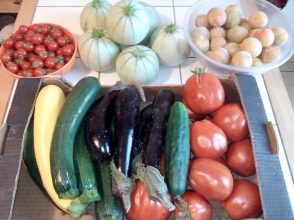 potager-légumes