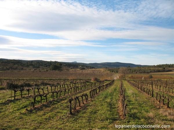 Saint-Drézéry-vigne