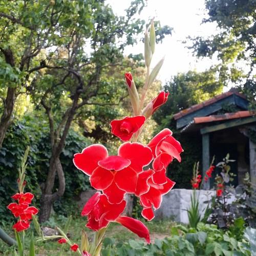 fleurs-jardin-potager-bio