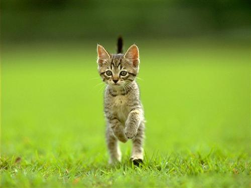 """Pense au petit chat!!!"""
