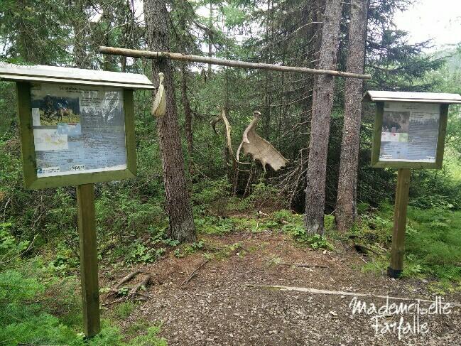 observation de l'ours dans les Laurentides