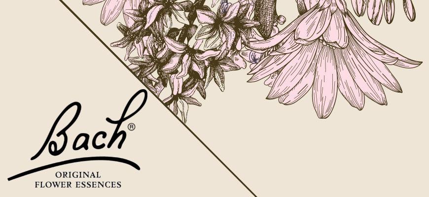 Fleurs de Bach® : des élixirs floraux dédiés au bien-être