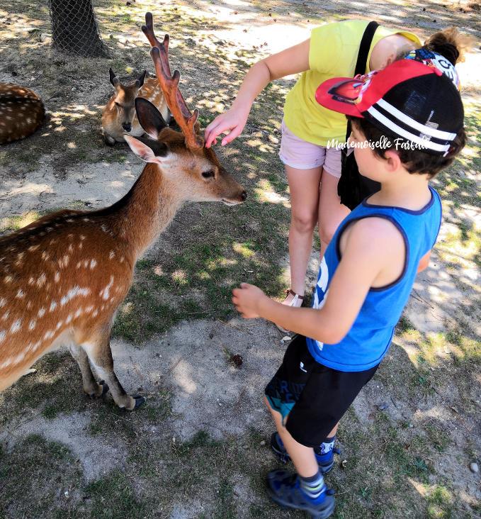Une journée à Nara