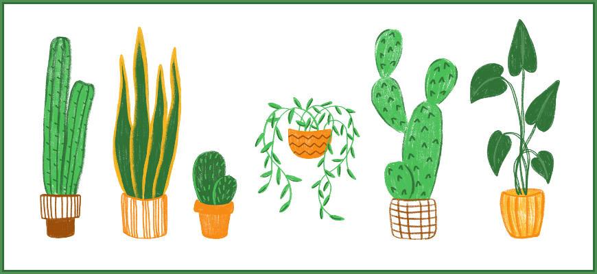 10 idées cadeaux pour les amateurs de plantes