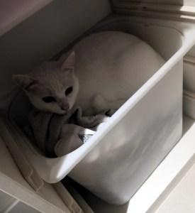 chat dans le linge