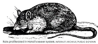 hanoi rat woodcut image