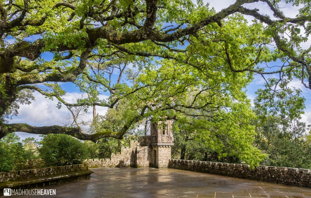 A tree with overhanging branches on one of the battlements in Quinta da Regaleira