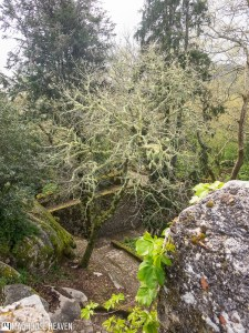 Wild vegetation at the entrance of the fortress that is the Moorish castle in Sintra