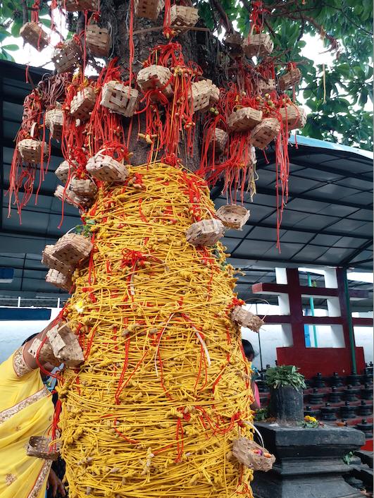 kotilingeshwara-wishtree.png