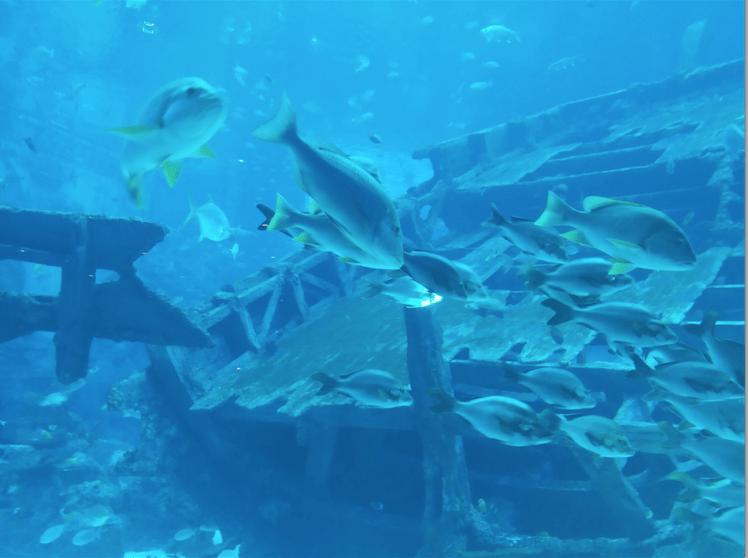 beauty of fishes, Sea Aquarium.png