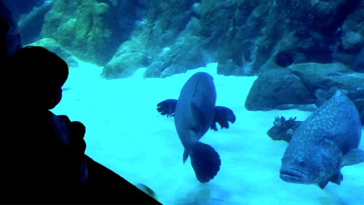 Aquarium Oceans park.png