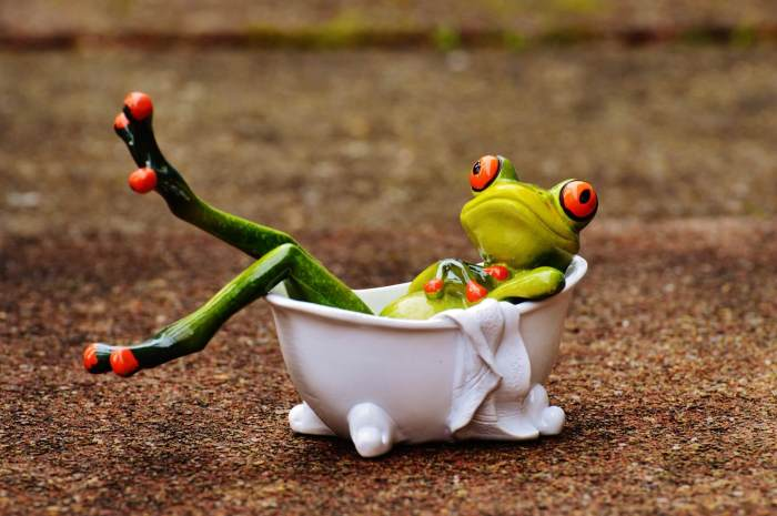 Funny Picture of a frog in a bathtub