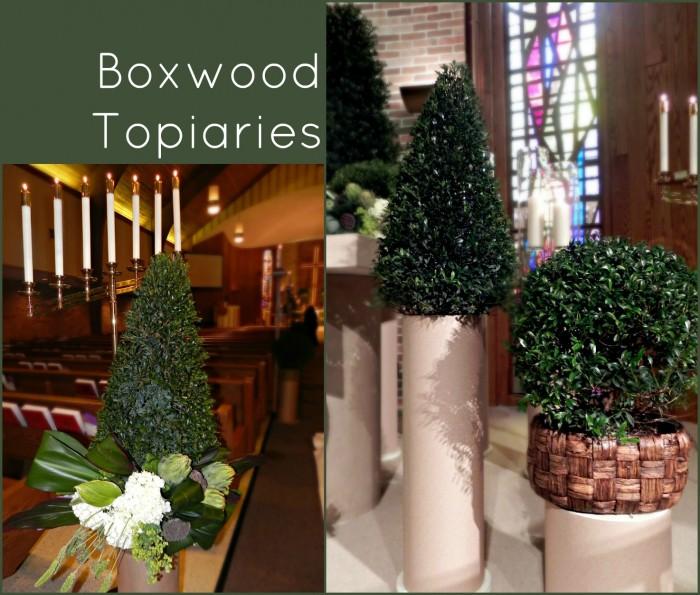 boxwood topiaries
