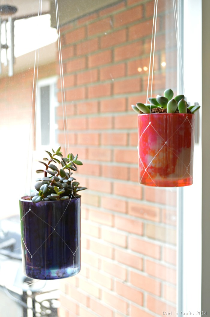 Succulents Hanging from Invisible Macrame