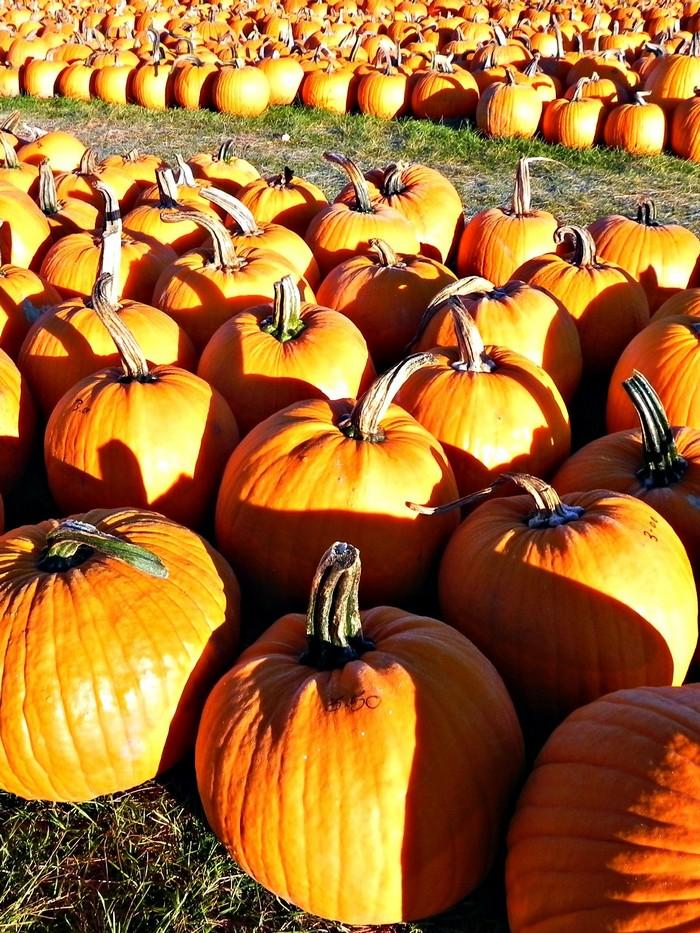 Pumpkin Carving Tools You May Already Have Pumpkins ForRent.com
