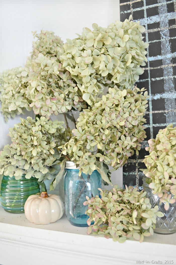 Dried Limelight Hydrangeas
