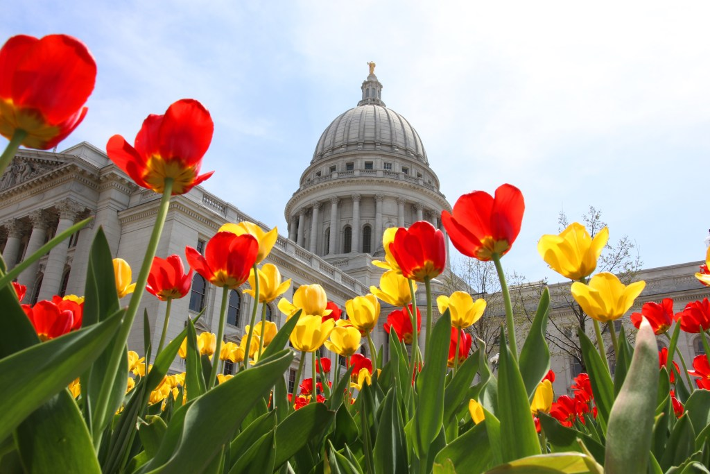 Wisconsin State Capitol building. Wisconsin State Capitol building spring view with flower bed with bright tulips on a foreground. City of Madison, the capital city of Wisconsin, Midwest USA. photo licensed on Adobe Stock