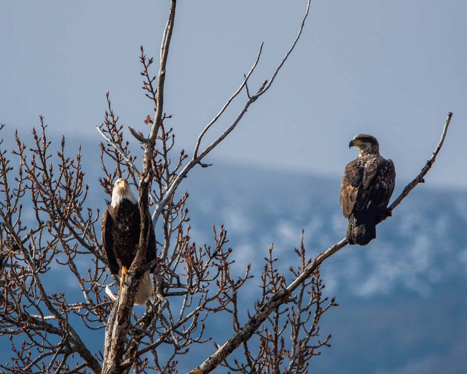 Sauk Prairie Eagles