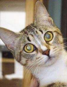 42-2012 WRHA Cat