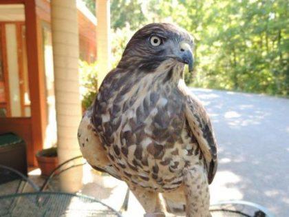 The Virginia Wildlife Center Presents: