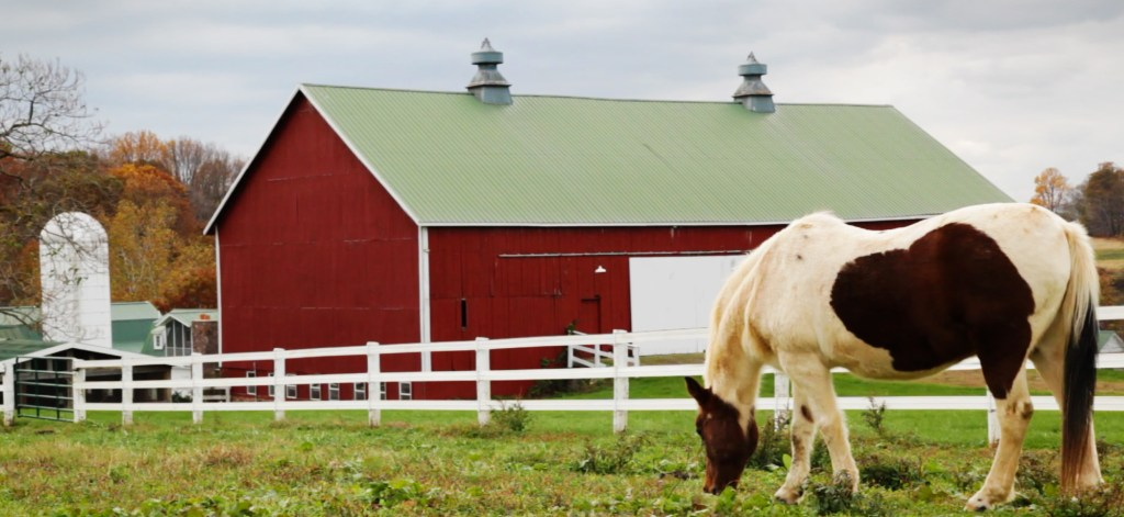 Measuring the Impact of Equine Therapy on Autistic Adults