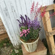 Potted Perennial Container Perfect Gardener In