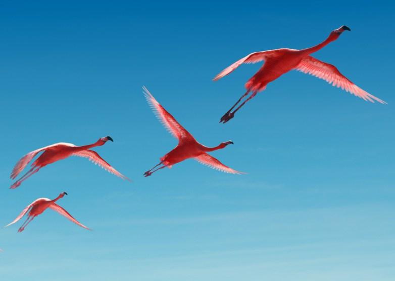 Recom Farmhouse CGI animals / pink flamingo