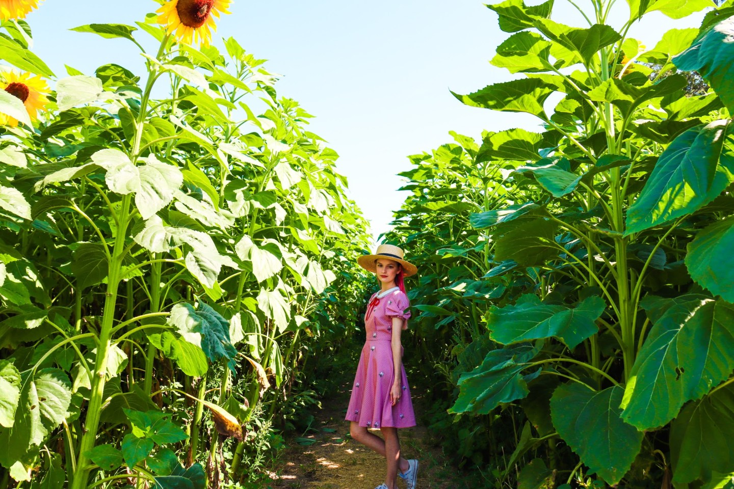A Day Among the Sunflowers