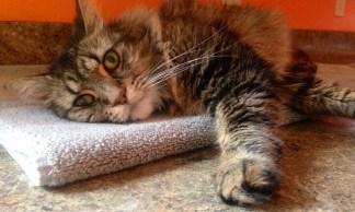 Mad Money Cat - budgets