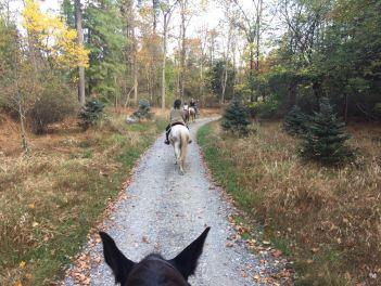 horses - healthy finances