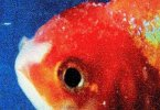 Vince Staples – Yeah Right