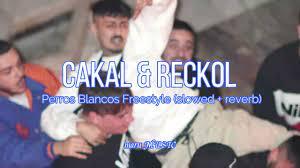 Cakal & Reckol – Perros Blancos Freestyle