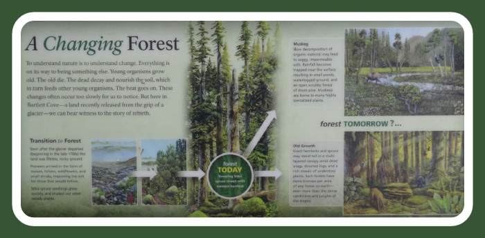 """""""a changing forest"""" - Bartlett Cove / Glacier Bay Nationalpark"""
