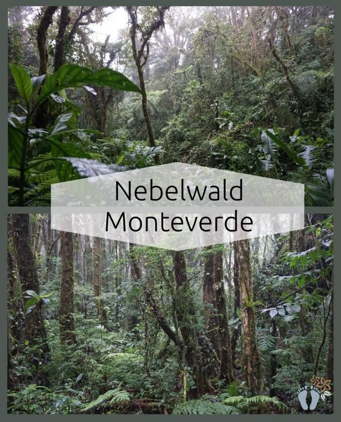 Costa Rica: Tag 02 und 03: Wanderung und Hängebrücken-Tour im Nebelwald Monteverde sowie Besuch des Orchideengartens 2