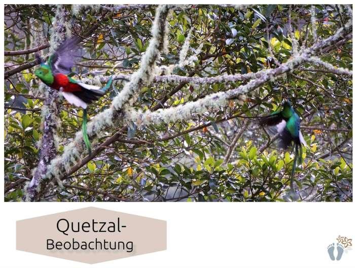 Costa Rica: Tag 13: Los Quetzales National Park 2
