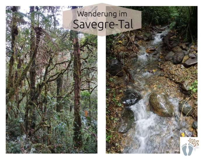 Costa Rica: Tag 13: Los Quetzales National Park 3