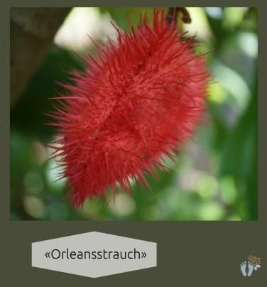 «Orleansstrauch» («Annattostrauch») {Reisetagebuch Costa Rica: Tag 15}