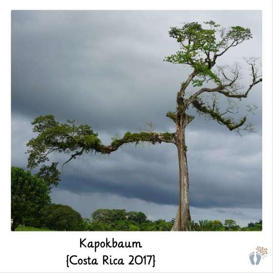 Kapokbaum {Costa Rica 2017}