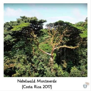 bei der Hängebrücken-Tour im «Nebelwald Monteverde» {Costa Rica 2017}